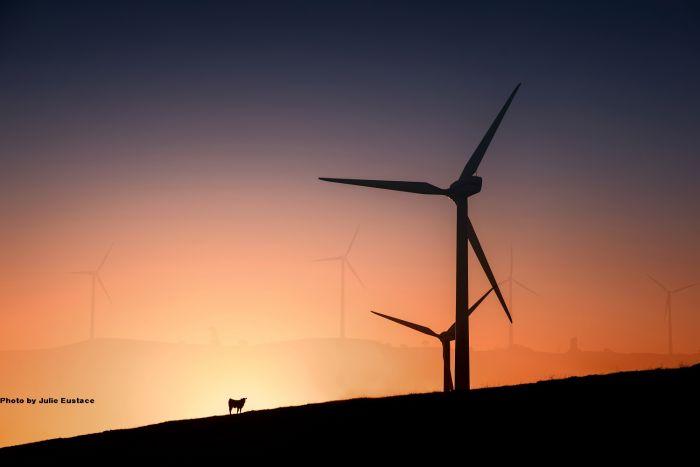 Millicent Windfarm