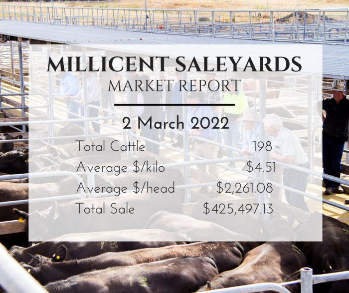 Saleyards Market Report