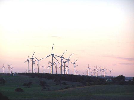 Windfarm Full View