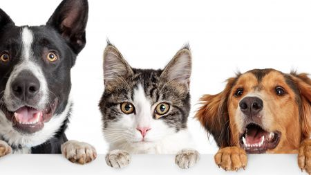 animals; pets; dog; cat; adobe stock