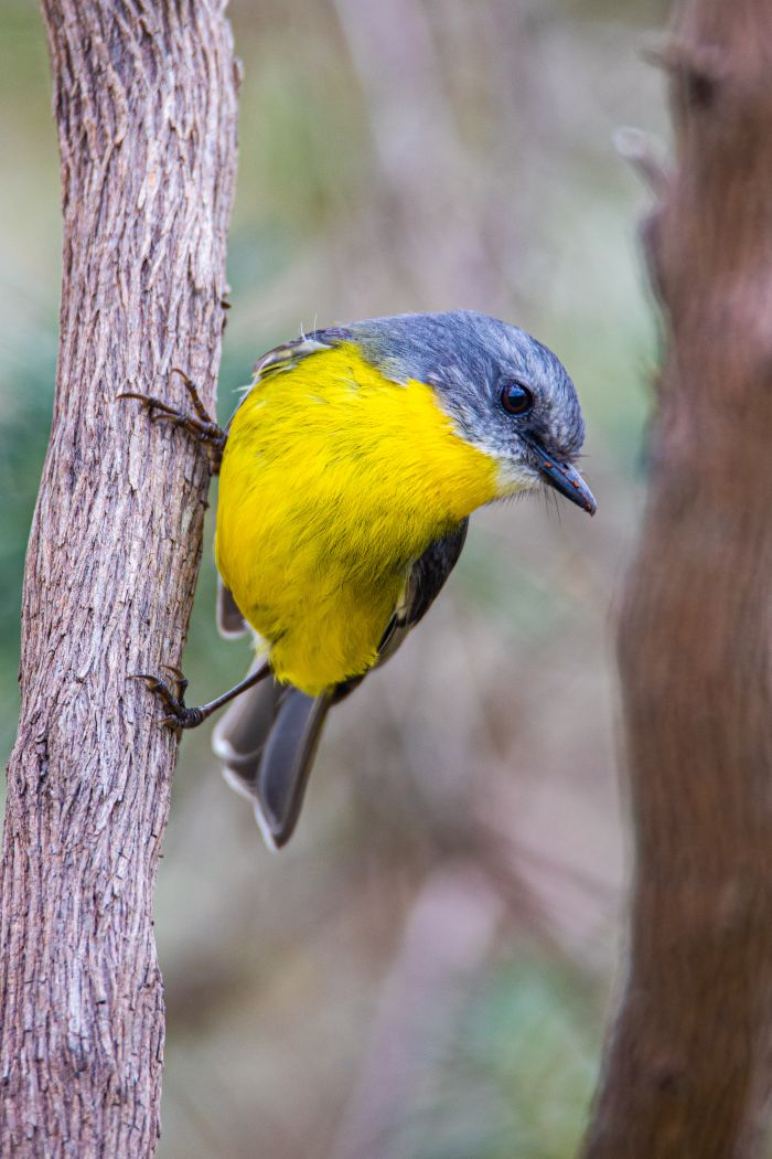 Wattle Range Photographic Competition